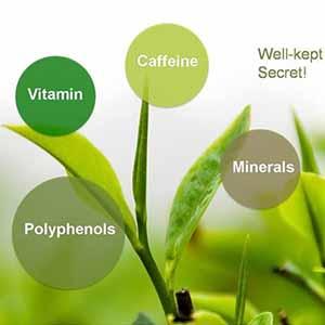 Component of green tea